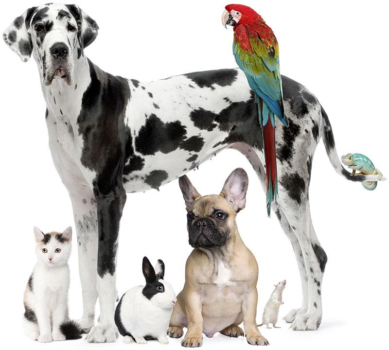 Surrey Pet Care